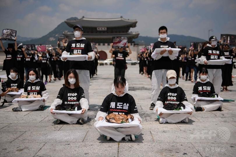 韓国・ソウルの光化門広場で、犬肉の取引に抗議する動物愛護団体の活動家ら(2018年7月17日撮影)。(c)AFP PHOTO / Ed JONES