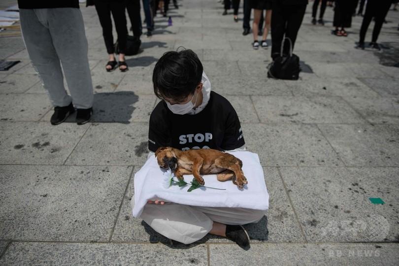 韓国・ソウルの光化門広場で、犬肉の取引に抗議する動物愛護団体の活動家(2018年7月17日撮影)。(c)AFP PHOTO / Ed JONES