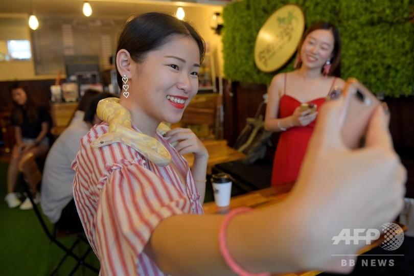 カンボジアの首都プノンペンにできた初の爬虫類カフェで、ニシキヘビを首に巻いて自撮りする女性(2018年8月18日撮影)。(c)TANG CHHIN Sothy / AFP