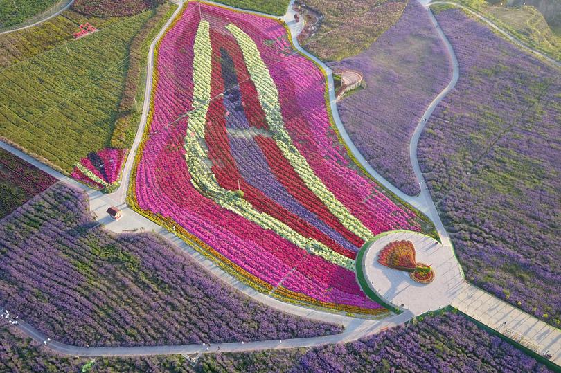白銀市白銀区にある現代農業科学技術モデル園の花畑「鳳園花海」(2019年8月13日撮影、小型無人機から)。(c)Xinhua News