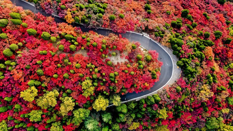 紅葉谷風景区の秋景色(2019年10月21日撮影、小型無人機から)。(c)Xinhua News