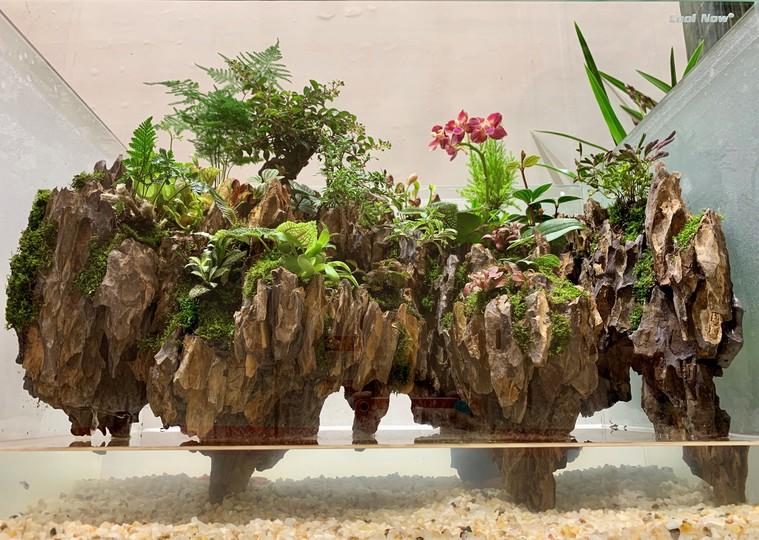 創作盆栽国際コンテストのイベントで展示された創作盆栽部門の受賞作品(2019年6月22日撮影、北京国際園芸局提供)。(c)Xinhua News