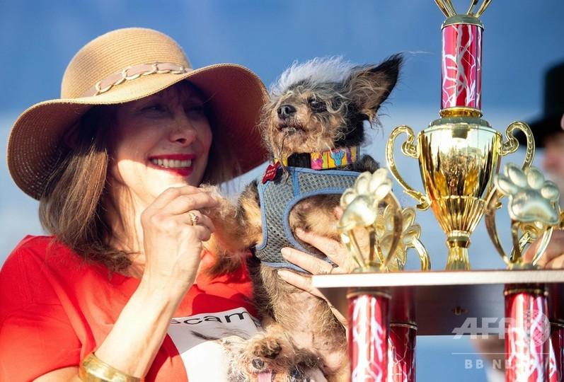 米カリフォルニア州ペタルーマで開催された「世界一醜い犬コンテスト」で、飼い主に抱きかかえられる優勝犬(2019年6月21日撮影)。(c)JOSH EDELSON / AFP