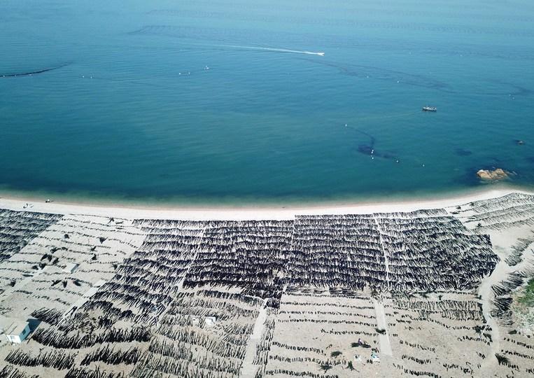 空から見た大欽島近海のコンブの養殖エリア(2019年5月23日撮影、小型無人機から)。(c)Xinhua News